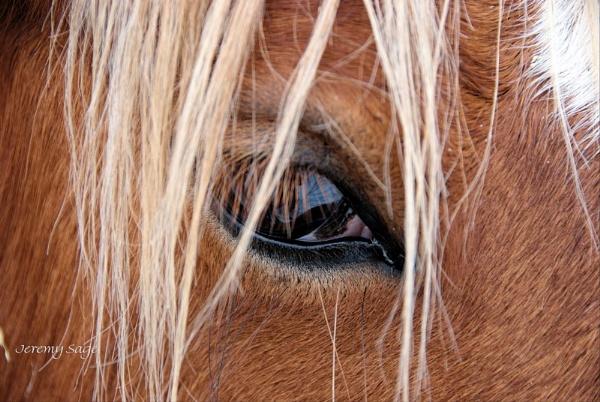 Eye Eye by Jez22