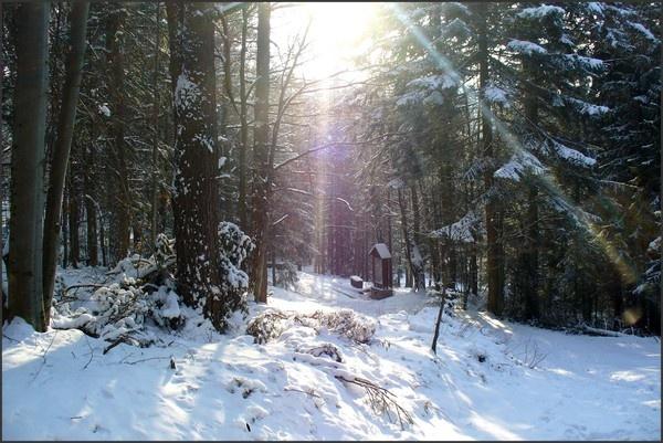 Winter wonderland by xanita