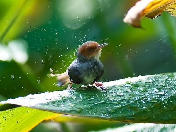 The bird is having a bath by hoang_van