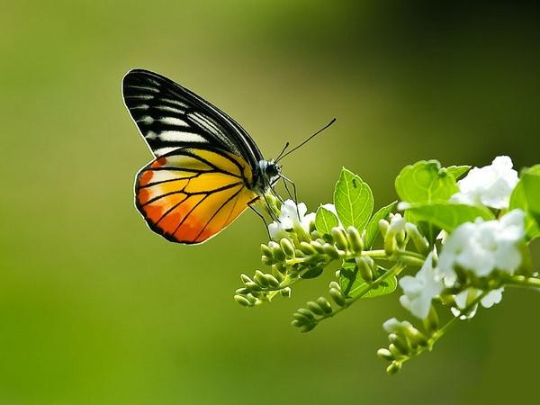 Butterfly by hoang_van