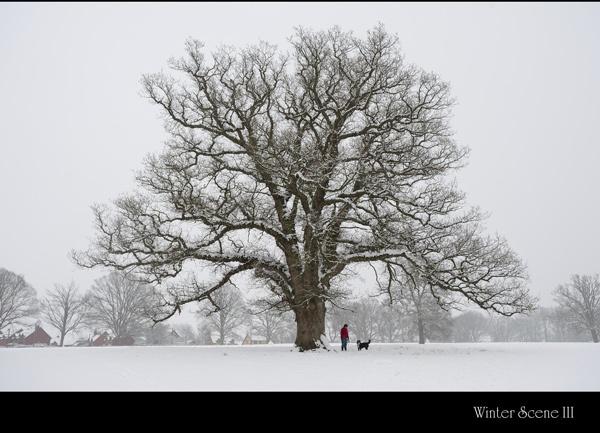 Winter Scene III by maroondah