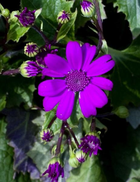 Evolution Bud to Flower by gjayesh