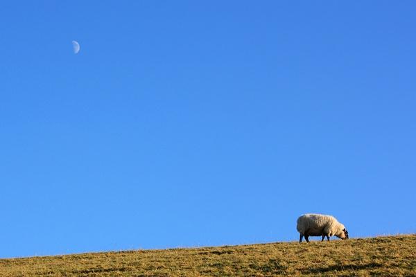 Baaaa-rk at the moon by JulianC