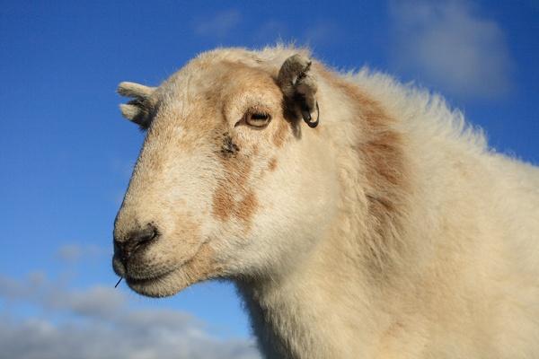 ewe lookin at me? by rockfish