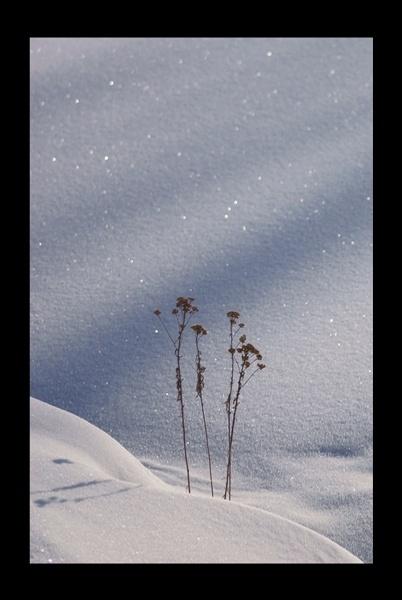 Winter Light II by A_Harrison