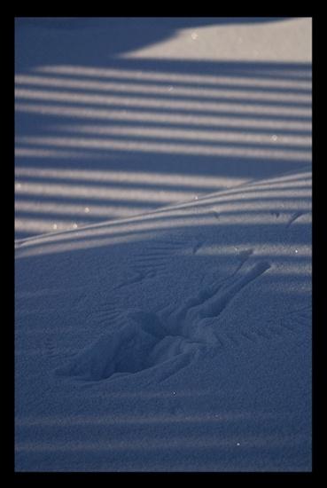 Winter Light IV by A_Harrison