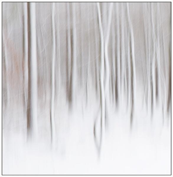 Winter..... by MalcolmM