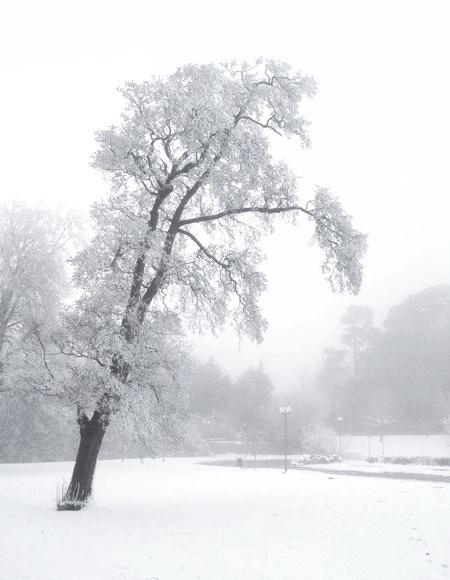 Tree by prysor