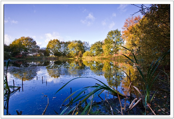 Pond Life by Stewy