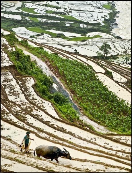 A Farmer by averity