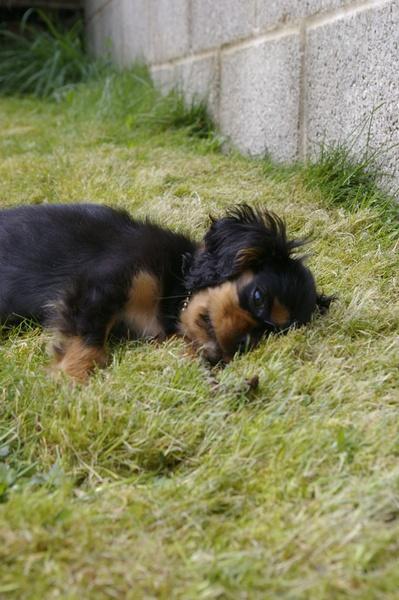 sleeping pup by ellaw
