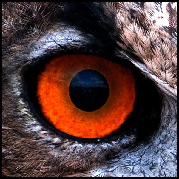 Eagle Eye by Kruger01