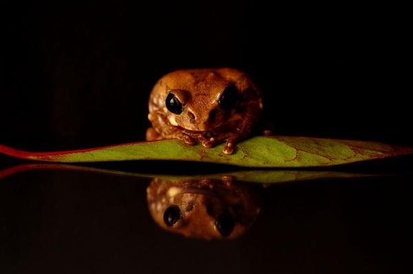 Tree Frog by walk8