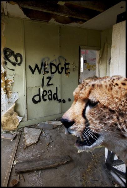 RIP Wedge by Dipperdick