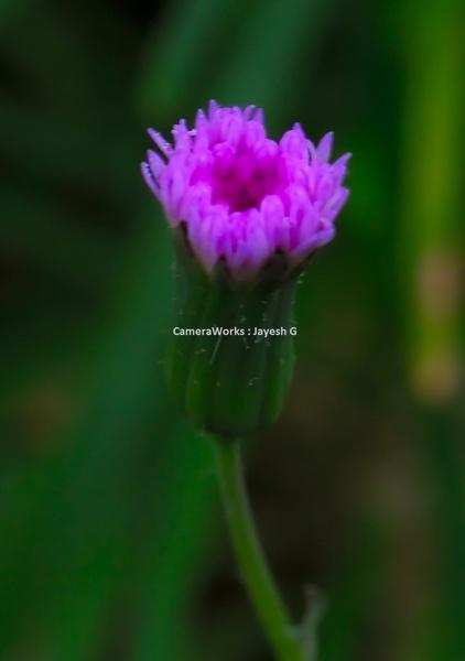 Tiny Spec by gjayesh