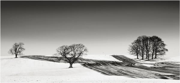 Trees In Threes by iansnowdon