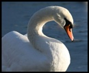 The Swan (v.2) by DonnaN