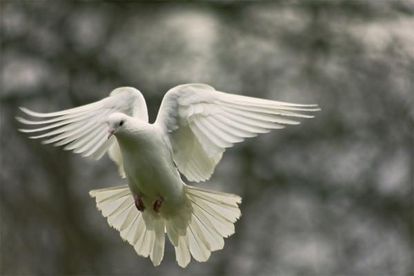 angel dance by agne