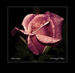 ''A Simple Rose''