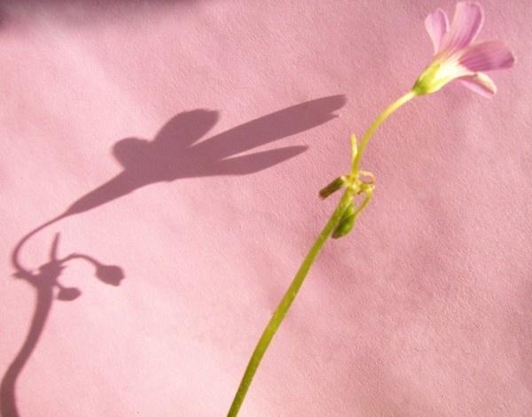 Wild pink flower by dipsekhar
