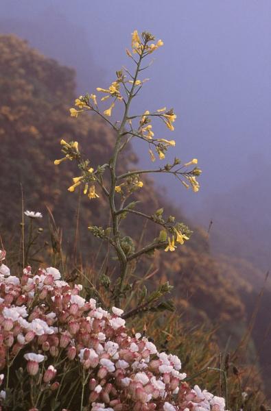 Sea Radish in fog. by Amanita05