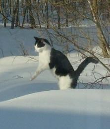 Kattsprång