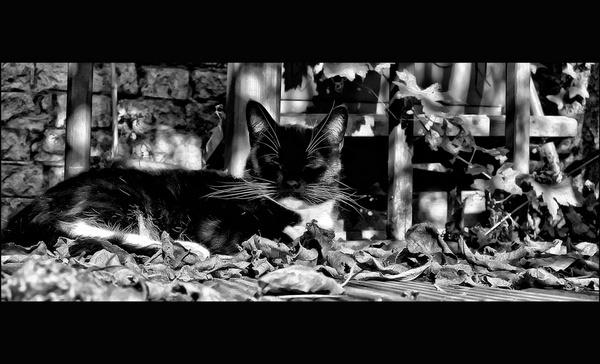 one cat by rocky41