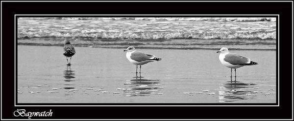 gulls by ITPSnapper