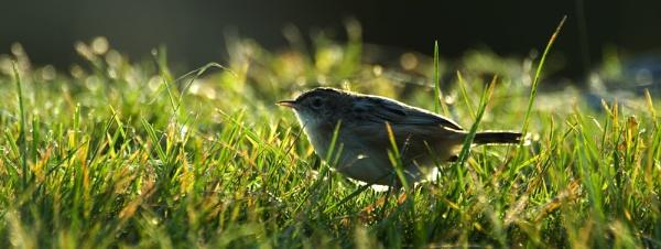 backlit bird by averity