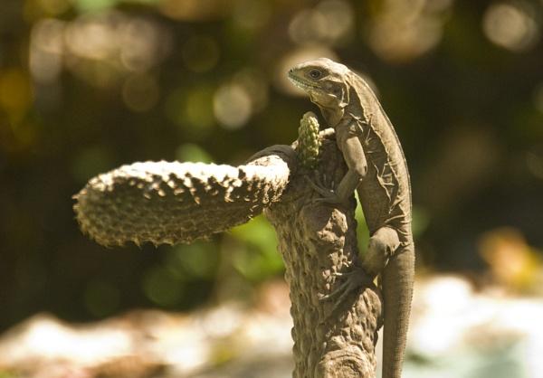 critter by mavericke