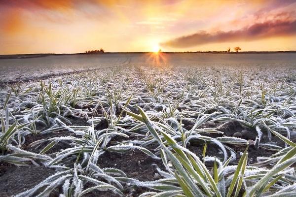 Frosty Dorset field by Sloman