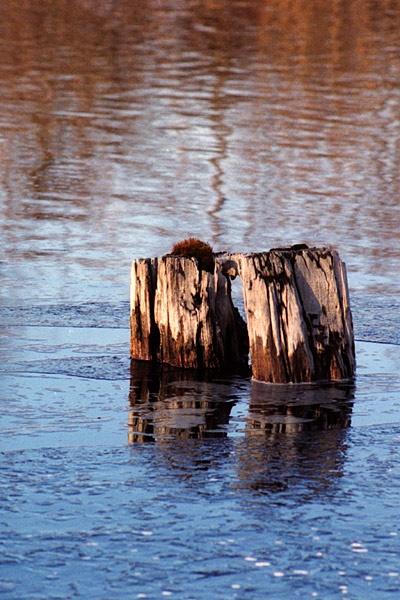 Ice Logs by TrevorB
