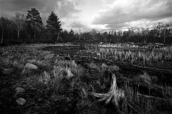 Swamp B&W by TrevorB