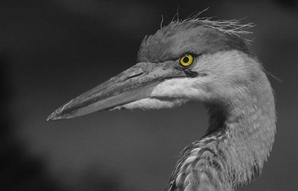 Hawk-Eye by FabVab