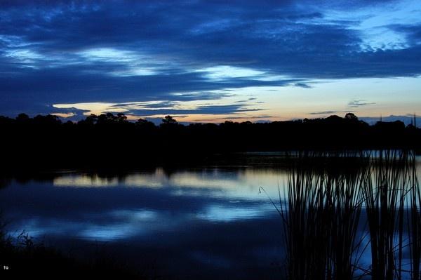 gator lake by tpics