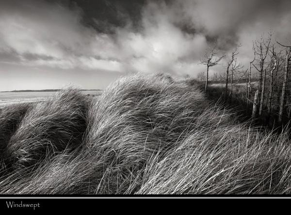 Windswept by Mari