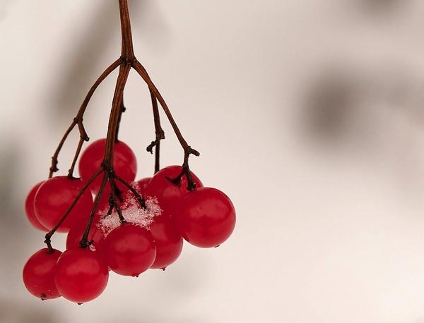 Berries by jaktis
