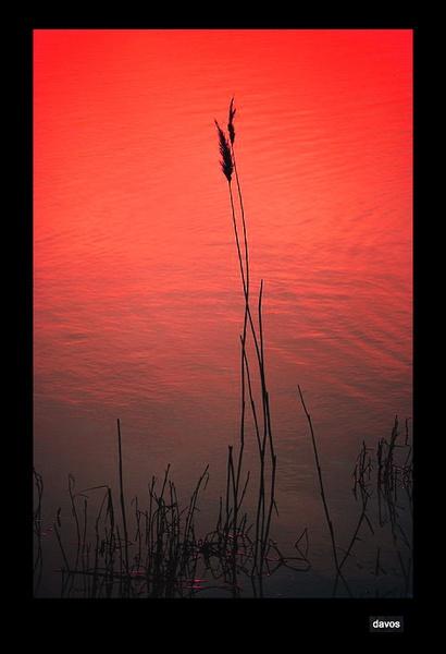 dancing reeds by villa3david