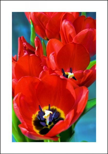 Red Cascade by shawpaul