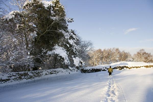Blazing a Trail by Blenkinsopp