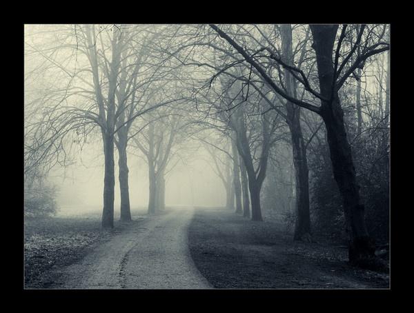 Fog by DaisyD50