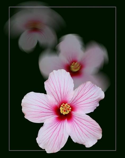 Flower by mgraj