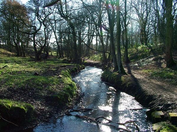 woodland stream by chocky