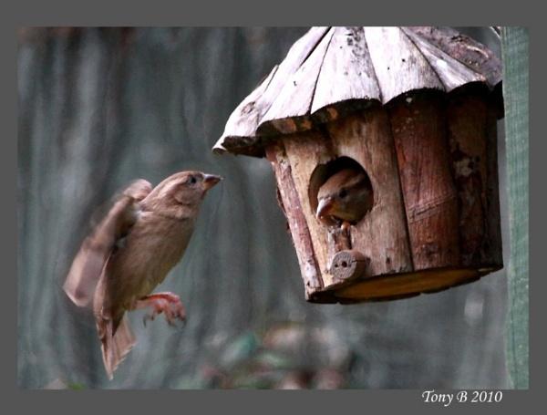 It\'s My House by Tony_B