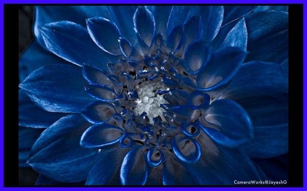 Moon Lit Flower by gjayesh