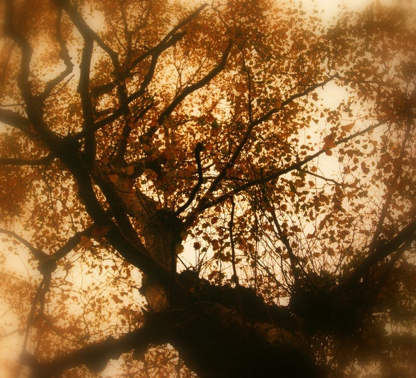 Tree by Manni1996