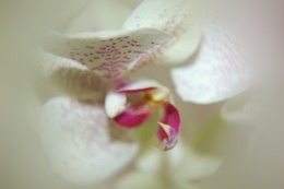Filtered Orchid