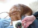 Sadie enjoys a cuppa by Mal_Reeves