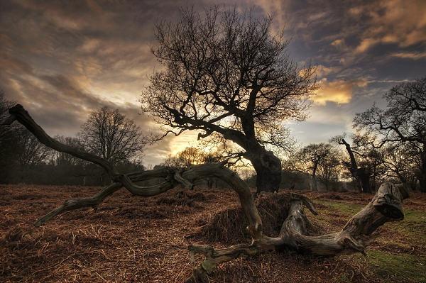 Ancient Oak by itsasetamendi