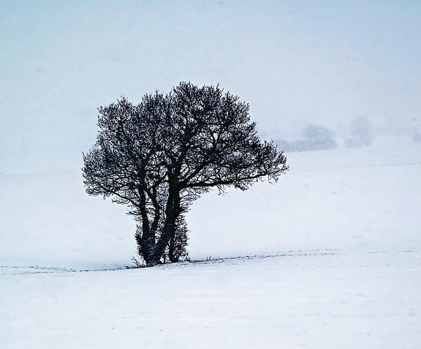 Blizzard by colmar